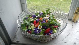 divé jedlé bylinky
